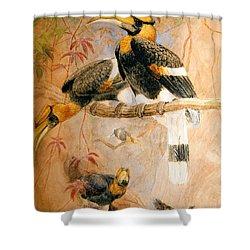 Hornbill  Shower Curtain