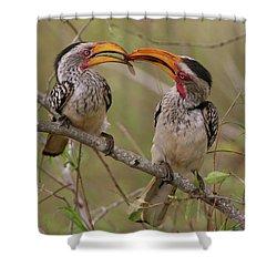 Hornbill Love Shower Curtain by Bruce J Robinson