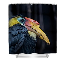 Hornbilled Bird Shower Curtain by Scott Lyons