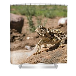 Horned Lizard Shower Curtain