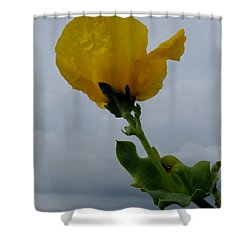 Horned Poppy Shower Curtain