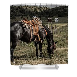 Horse 3 Shower Curtain