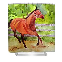 Horse #3 Shower Curtain