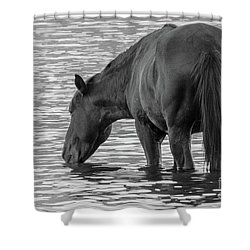 Horse 5 Shower Curtain