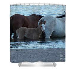 Horse 9 Shower Curtain