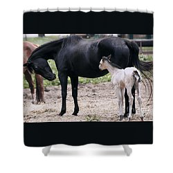 Shower Curtain featuring the painting Horse And Colt by Debra Crank