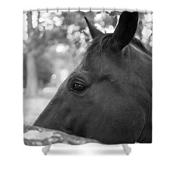 Horse At Fence Shower Curtain
