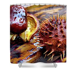 Horse Chestnut Aesculus Shower Curtain