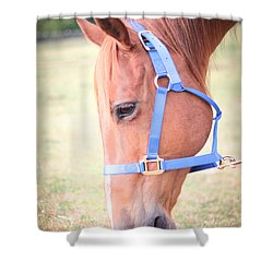 Shower Curtain featuring the photograph Horse Eating Grass by Kelly Hazel