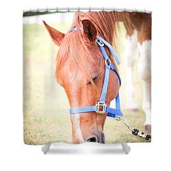 Shower Curtain featuring the photograph Horse Eating In A Pasture In Vibrant Color by Kelly Hazel