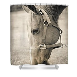 Shower Curtain featuring the photograph Horse Eating In A Pasture by Kelly Hazel
