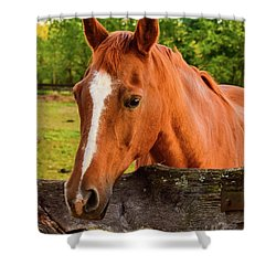 Horse Friends Shower Curtain