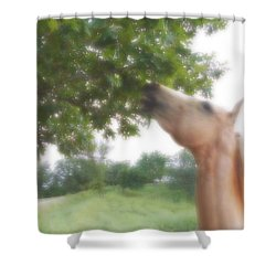 Shower Curtain featuring the digital art Horse Grazes In A Tree by Jana Russon