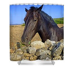 Horse Grazing At San Adeodato Shower Curtain by Dee Flouton