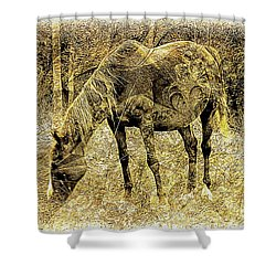 Horse Grazing On Pasture 2 Shower Curtain