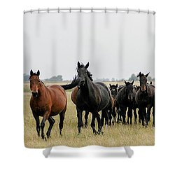 Horse Herd On The Hungarian Puszta Shower Curtain