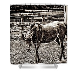 Horse In Black And White Shower Curtain by Annie Zeno