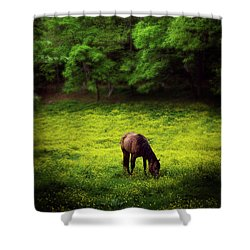 Horse In Flowers Shower Curtain