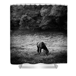 Horse In Flowers In Black And White Shower Curtain