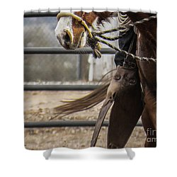 Horse In Hackamore Shower Curtain