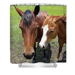 Horse Love Shower Curtain