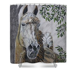 Horse Shower Curtain by Melita Safran