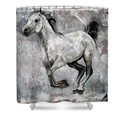 Horse Painting Stallion Lipizzaner Shower Curtain by Ginette Callaway