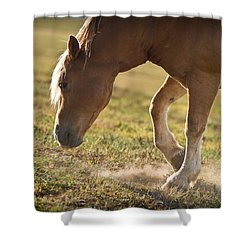 Horse Pawing In Pasture Shower Curtain by Steve Gadomski