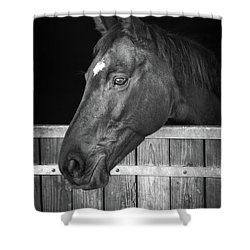 Shower Curtain featuring the photograph Horse Portrait by Delphimages Photo Creations