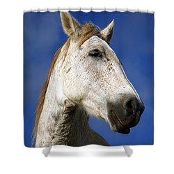 Horse Portrait Shower Curtain by Gaspar Avila