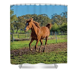 Horse Trot  Shower Curtain