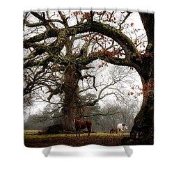 Horse Under Tree Shower Curtain
