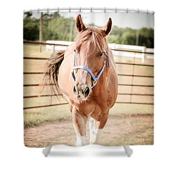 Shower Curtain featuring the photograph Horse Walking Toward Camera by Kelly Hazel