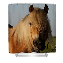 Horse With No Name Shower Curtain by Gary Bridger