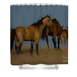 Horses 1 Shower Curtain