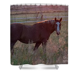Horses 2 Shower Curtain