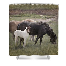 Horses And Colt  Shower Curtain