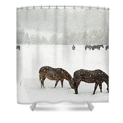 Horses And Snow Shower Curtain