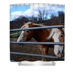 Horses At The Gate Shower Curtain by Diane Lent