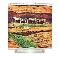 Horses Basking In The Sun Shower Curtain