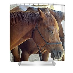 Horses  Shower Curtain