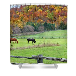 Horses Contentedly Grazing In Fall Pasture Shower Curtain