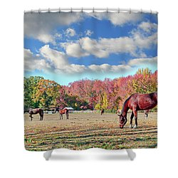 Horses Grazing At A Stable In Maryland Shower Curtain