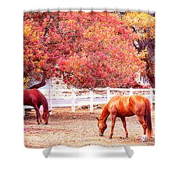 Horses, Grazing Shower Curtain