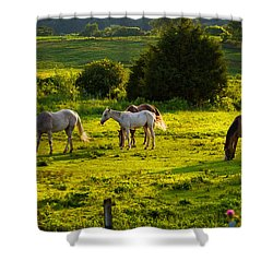 Horses Grazing In Evening Light Shower Curtain