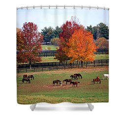 Horses Grazing In The Fall Shower Curtain