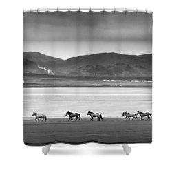 Horses, Iceland Shower Curtain