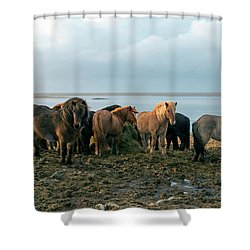 Shower Curtain featuring the photograph Horses In Iceland by Dubi Roman