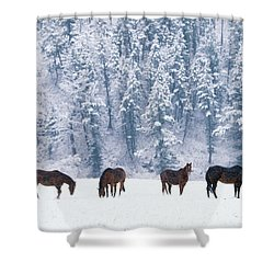 Horses In The Snow Shower Curtain by Alan and Sandy Carey and Photo Researchers