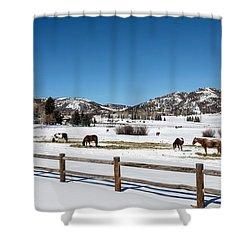 Horses On A Small Farm Near The Aspen Airport Shower Curtain
